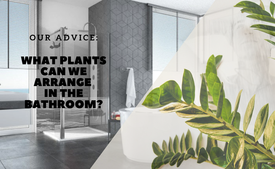 What plants can we arrange in the bathroom?